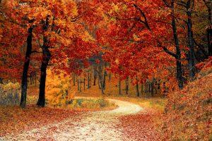 Arbres-automnes
